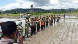 Panen-Raya-Gotong-Royong-TNI-Manunggal-dengan-Rakyat-Mei-2015-di-Kab-TTS-NTT-4