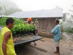 Pendistribusian-Bibit-Tanaman-Secara-Gratis-Untuk-Pemberdayaan-Perkebunan-Mandiri-Rakyat-Pulau-Timor-2