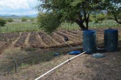 Tanam-Jambu-Mete-dengan-Konsep-Agro-Wisata-April-2015-di-Desa-Oepese-TTU-3