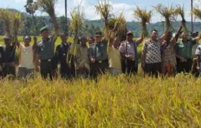 Panen Raya Gotong Royong TNI Manunggal dengan Rakyat Mei 2015 di Kab TTS NTT -1