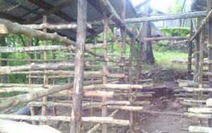 Perkembangan Kegiatan Pembangunan Lahan Kandang sebagai Percontohan Peternakan Sapi di Bakitolas TTU - NTT